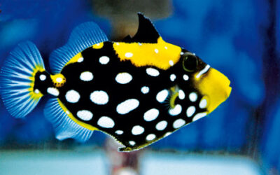 Tank-Raised Tangs & Triggers Become a Reality
