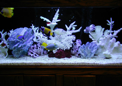 Residential 125 Gallon Saltwater Aquarium System with Natural Coral Decorations