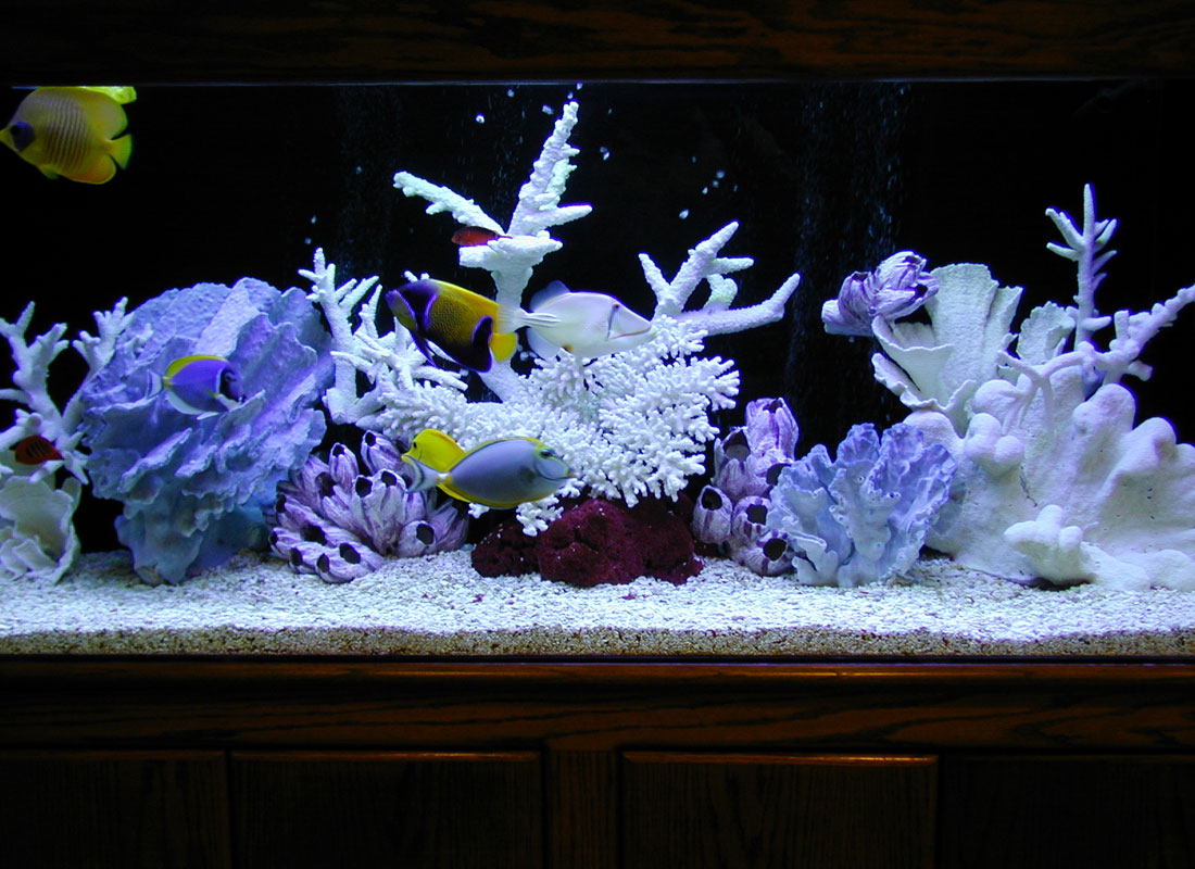 Portfolio aquatic perfection for Artificial coral reef aquarium decoration uk