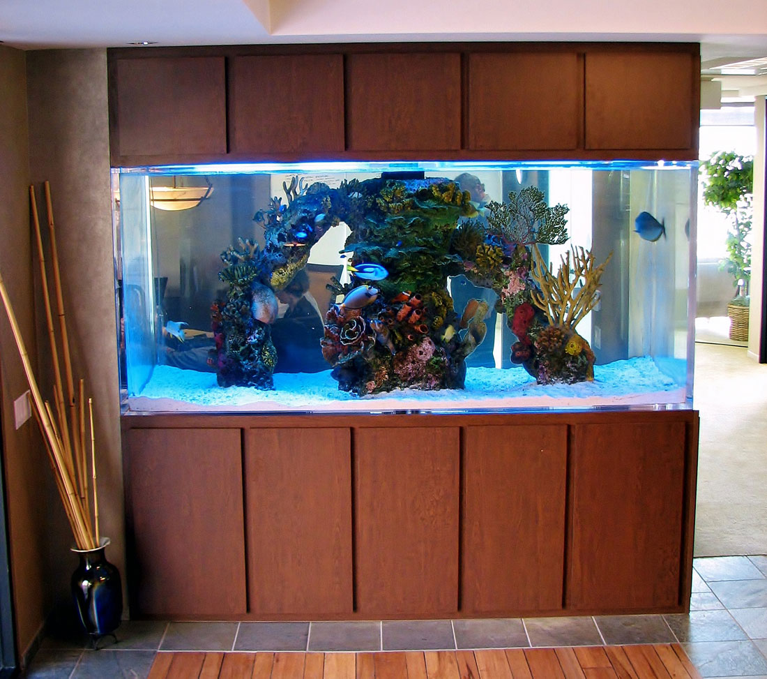 Commercial Aquarium, One Coach