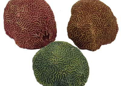 Brain-Coral-113RD-BR-GN