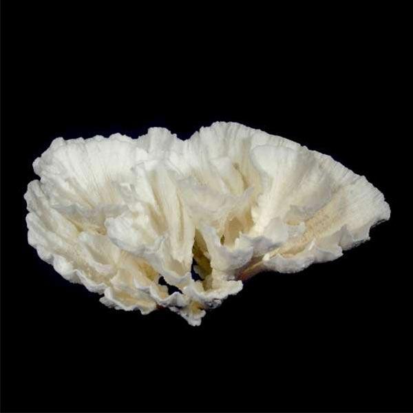 Natural Coral Substrates And Rocks Aquatic Perfection