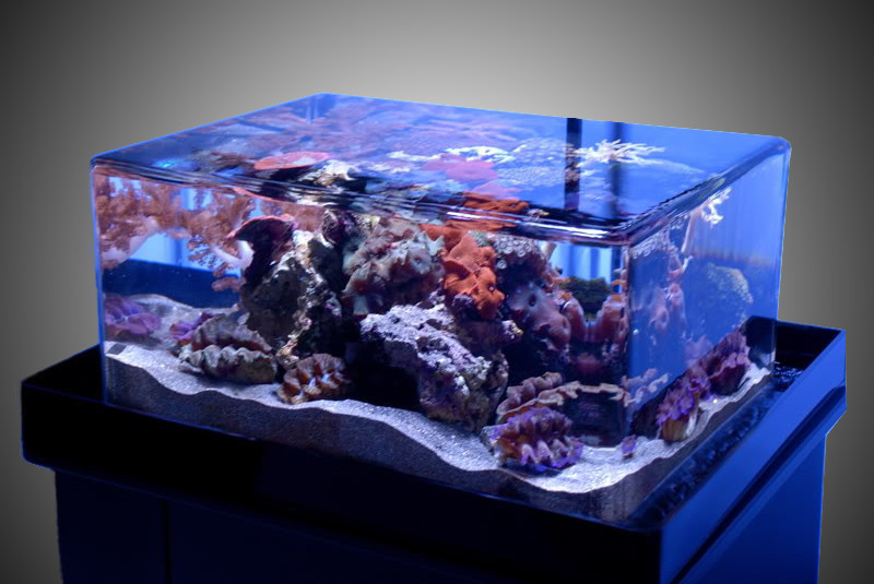Standard Aquariums Aquatic Perfection